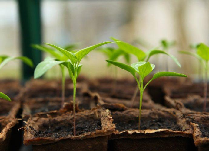 Szklarnia do ogrodu - czy warto ją mieć?
